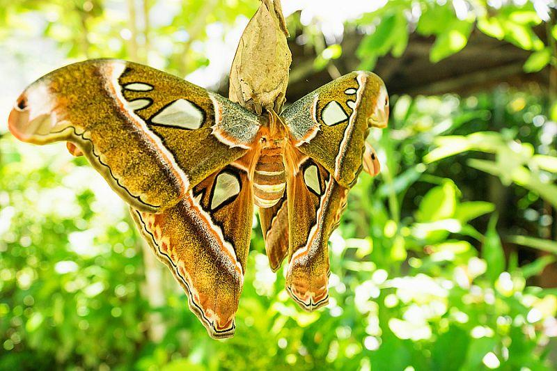 he Bohol Habitat Conservation Center
